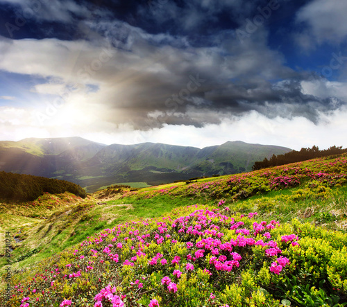 Fototapeta wiosna krajobraz-gorski-wiosna