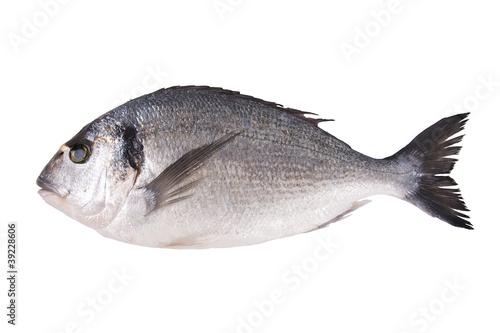 dorada, pescado