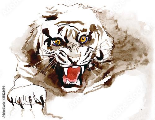 tiger (series C)