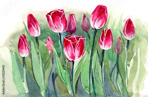 Naklejka dekoracyjna tulips (sereis C)