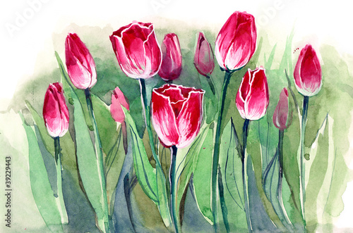 tulipany-sereis-c