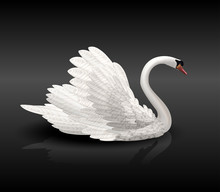 White Swan On Black Water With Reflection