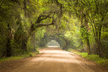 Charleston SC Dirt Road Forest...