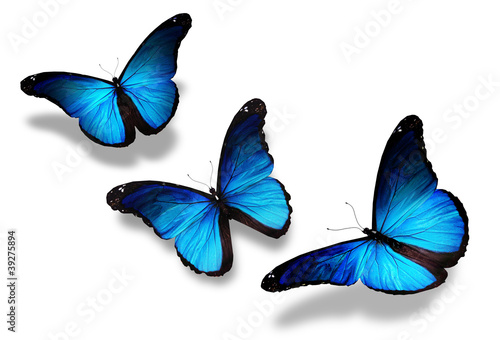 Valokuva  Three blue butterflies flying, isolated on white