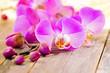 canvas print picture - Orchideen auf Holzuntergrund