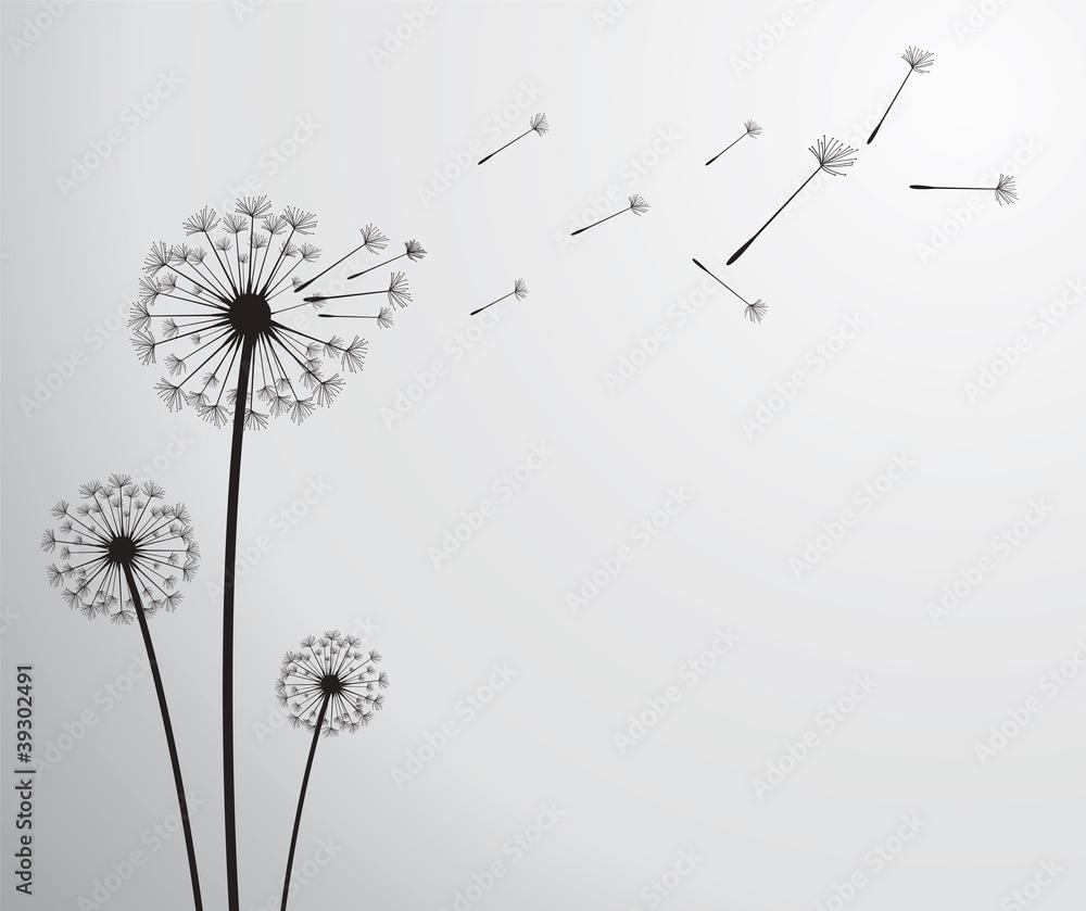 Fototapety, obrazy: vector dandelion