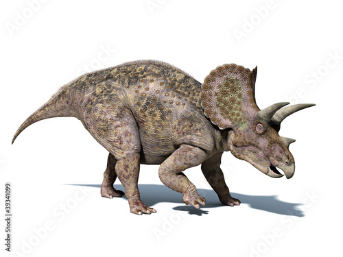 Photo  Triceratops dinosaur, isolated on white background, with clippin