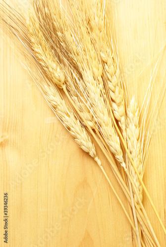 Foto op Canvas Paardebloemen en water Bearded Wheat