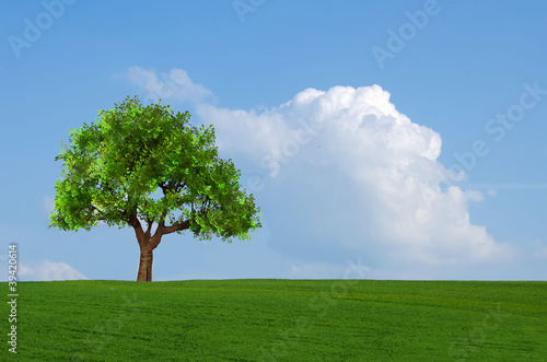 Foto op Aluminium Baobab the green field and the tree