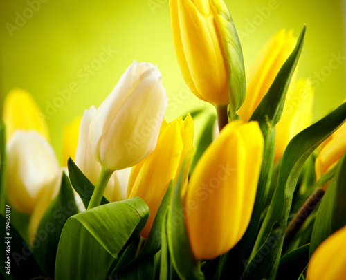 Foto op Plexiglas Tulp Yellow and white tulip flowers with green copy space