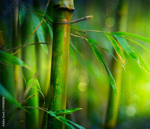 Bamboo #39488818