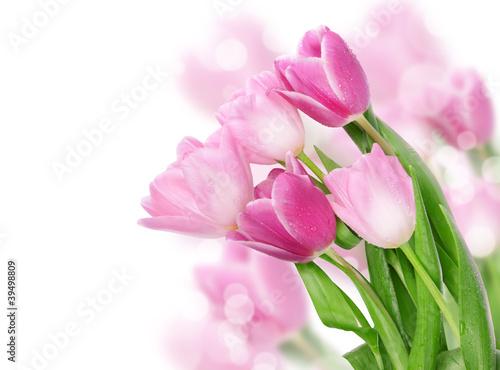Papiers peints Tulip Tulip flowers postcard concept