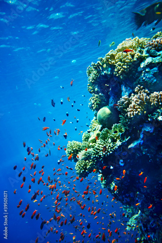 Group of coral fish in blue water.