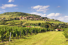 French Village And Vineyard