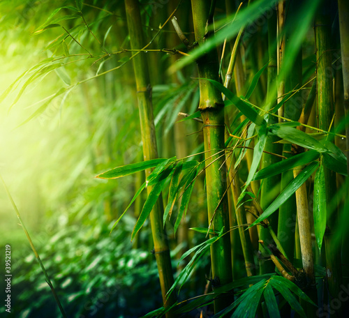 Photo Stands Bamboo Bamboo