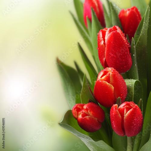 tulipany-w-ogrodzie