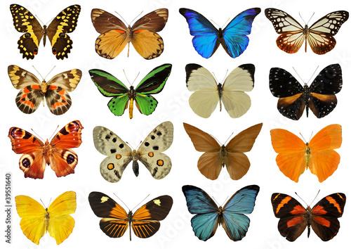 Papiers peints Papillon planche de papillons