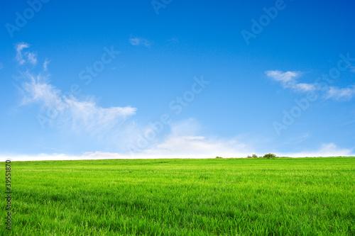 Foto op Plexiglas Platteland Field on a background of the blue sky