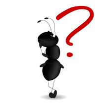 Formica - Punto Interrogativo - Queston Mark