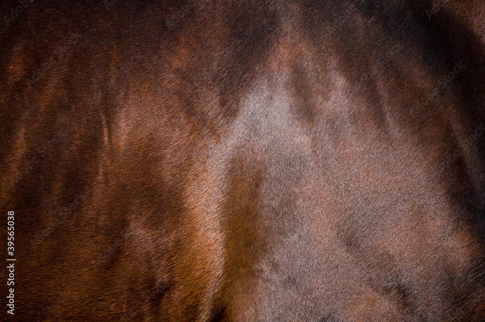 Fototapety, obrazy: Skin of bay horse