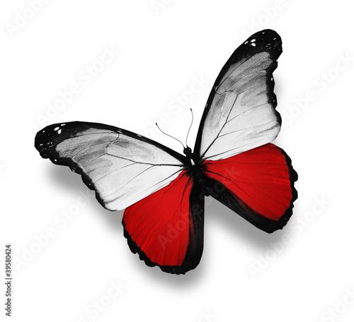 Keuken foto achterwand Rood, zwart, wit Polish flag butterfly, isolated on white
