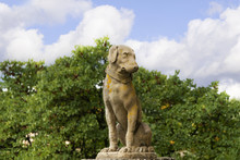 Statue Of Dog In Settignano Tu...