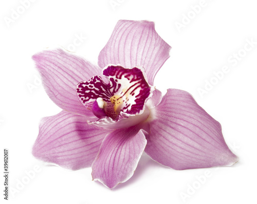 Obraz na plátne Pink orchid on a white background