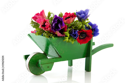 Photo Bouquet Anemones in wheel barrow