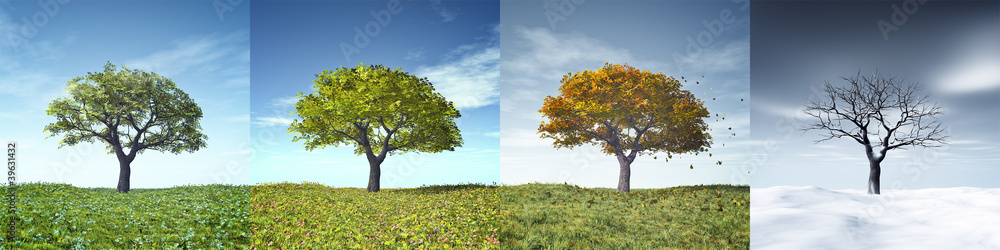 Fototapety, obrazy: four seasons tree