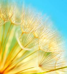 Panel Szklany PodświetlaneSoft dandelion flowers