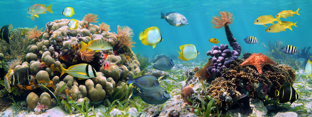 FototapetaUnderwater panorama in a coral reef with colorful tropical fish and marine life