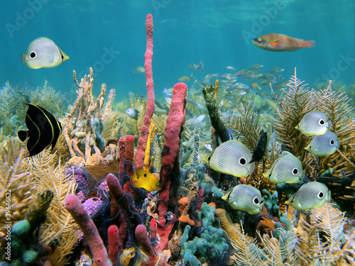 Cadres-photo bureau Tortue Healthy coral reef with colorful sea sponges and tropical fish, Caribbean sea