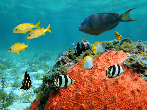 Fotografie, Obraz  Lagoon and its inhabitant