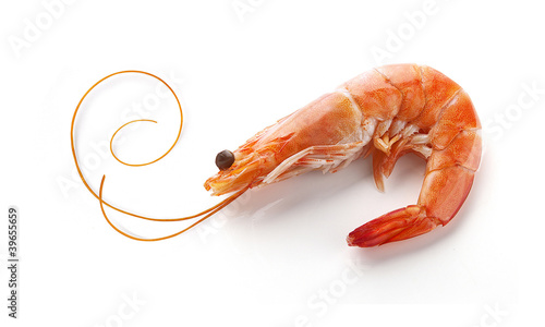 Poster Coquillage Shrimp