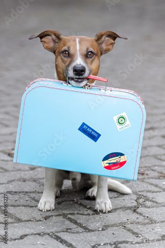 Fotografie, Obraz  Dog with luggage