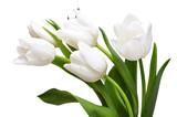 Fototapeta Tulipany - White tulips