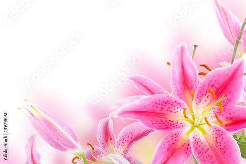 Plakat Różowa lilia