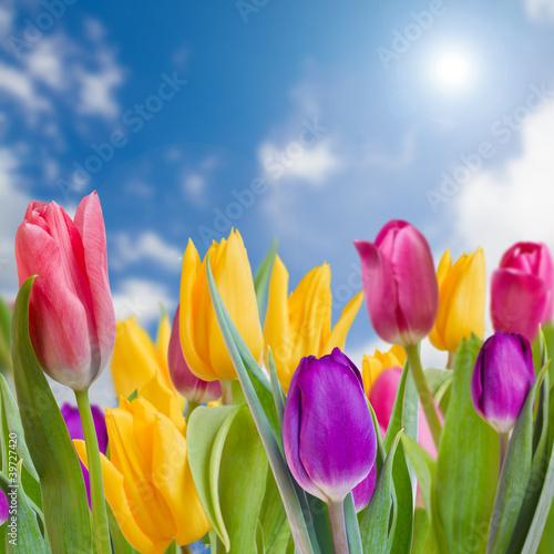 Tematy obrazów wiosenny-ogrod-tulipany-piekne-wiosenne-kwiaty
