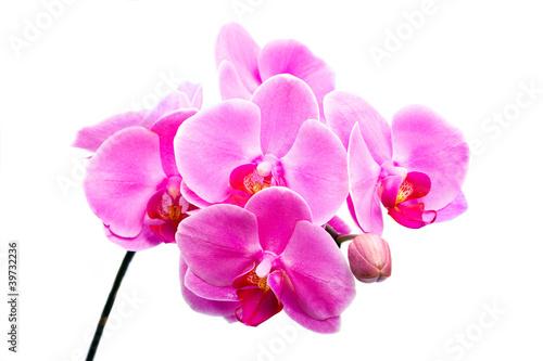 piekny-kwiat-rozowy-storczyk