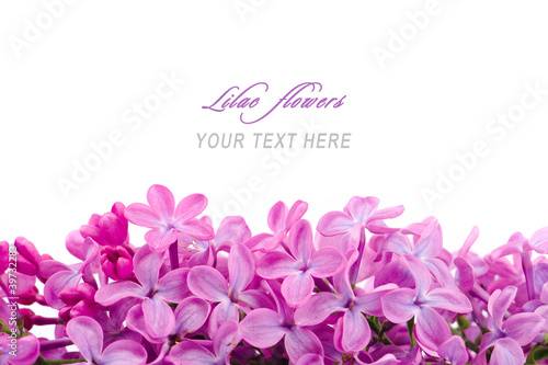 Staande foto Lilac Lilac flowers with sample text