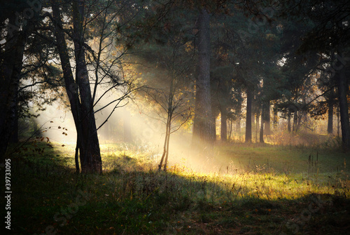 Staande foto Bos in mist sunbeams in fog in the forest