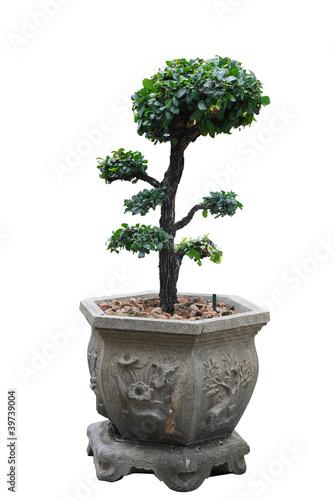 Fotobehang Bonsai Tree on white background