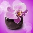 Leinwandbild Motiv Orchidée dans un vase, fond rose
