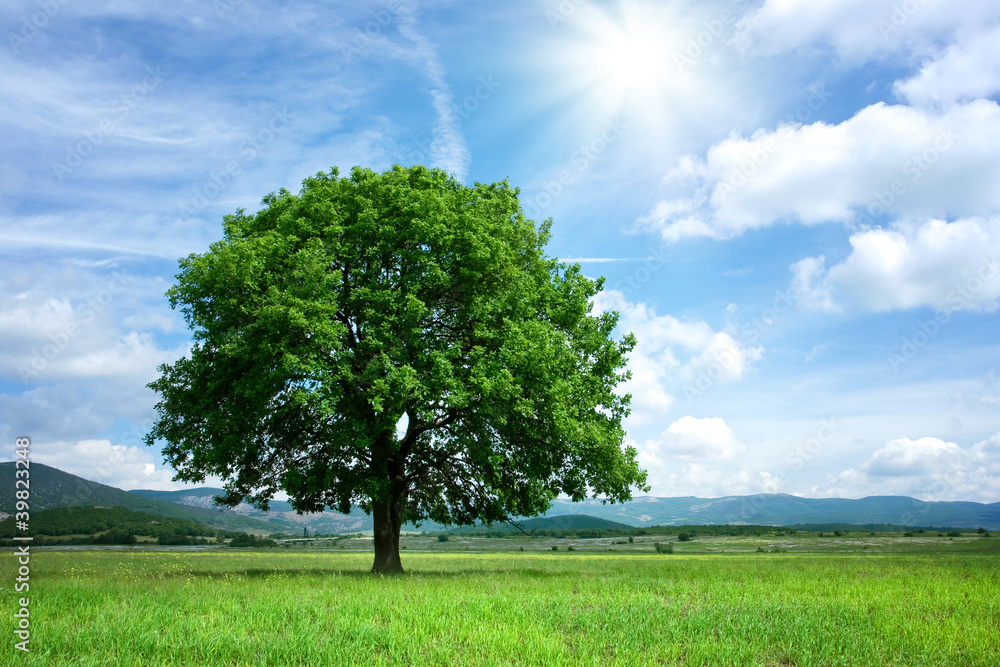 Tree on green field