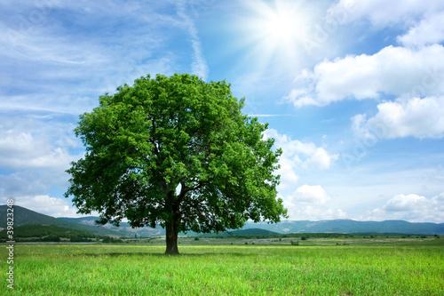 Foto-Kissen - Tree on green field