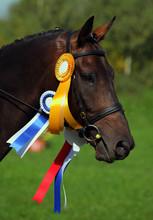 A Beautiful Winner Dressage Ho...