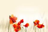 Fototapeta Kwiaty - maki