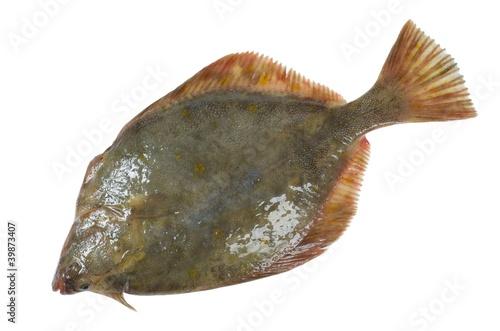 flounder Fototapete
