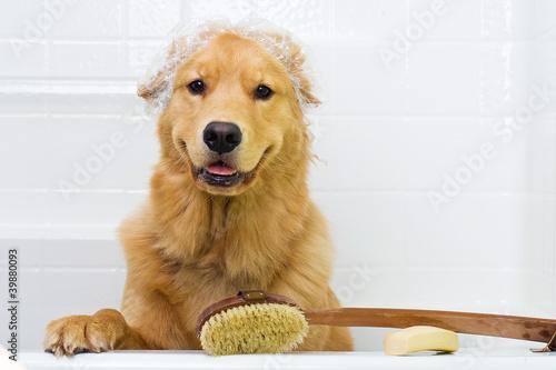 Fotografie, Obraz  Happy Dog in the Bath Tub wearing a shower cap