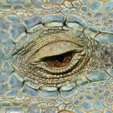 Oko jaszczurki